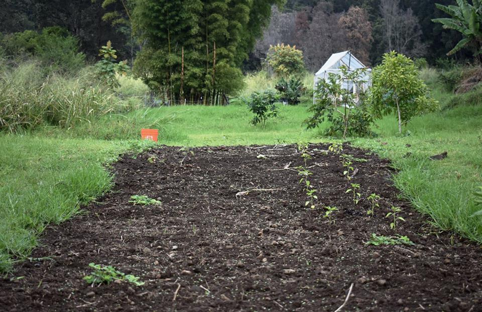 Farm plot with plants and dirt, nature